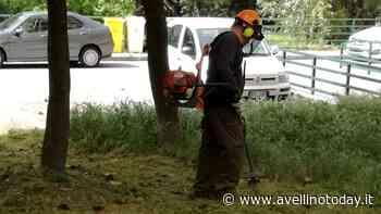 Solofra, taglio del verde su tutto il territorio comunale - AvellinoToday