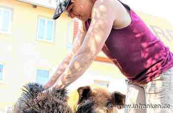 Burghaslach: Können Haus- und Wildschwein noch Freunde werden? - inFranken.de