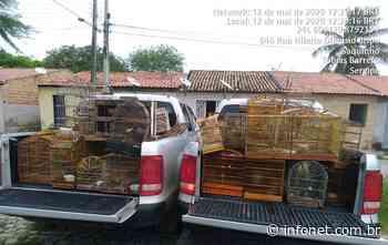 Adema e Policia Civil resgatam 76 aves silvestres em Tobias Barreto - Infonet