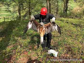 Schlagabtausch um toten Rotmilan in Borchen - Radio Hochstift