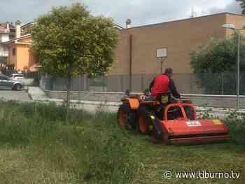 Tor Lupara: giardinetto dedicato a Mauro Simeoni, lo pulisce il fratello Paolo - Tiburno.tv - Tiburno.tv