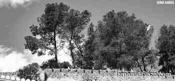 Las gaviotas se adueñan del castillo de Dénia, cerrado y vacío por el coronavirus - La Marina Plaza. Noticias. Diario de la Marina Alta.