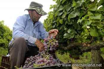 Exporte griechischer Weine in EU-Staaten gesunken – steigende Nachfrage aus Drittländern - Griechenland.net