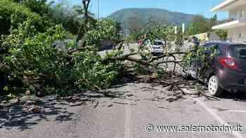 Raffiche e danni, albero abbattuto dal vento a Roccapiemonte: dramma sfiorato - SalernoToday