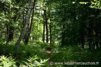 Guyancourt (France) (AFP). Dans les forêts d'Ile-de-France, concilier quiétude des animaux et besoin de nature - Le Courrier Cauchois