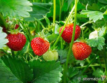 Agricool cultive des fruits et légumes dans des containers à La Courneuve - Alternativi.fr