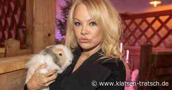 Pamela Anderson will lieber ein Tier sein - klatsch-tratsch.de