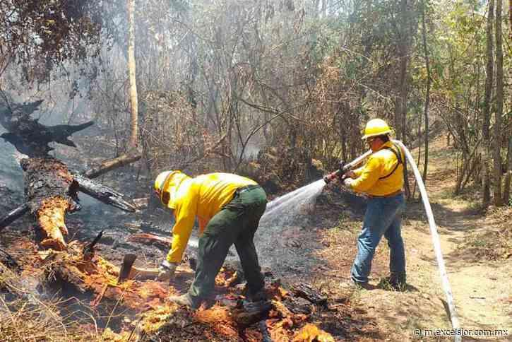 Tras 24 días, Conafor sofoca incendio en Bacalar, Q. Roo - Excélsior