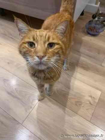 (PHOTOS) Thonon-les-Bains : ils retrouvent leur chat… six ans après sa disparition! - lepaysgessien.fr