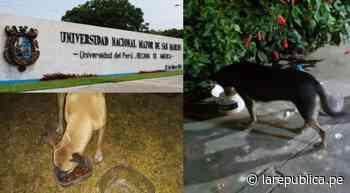 Organizan recolección de alimentos para animales abandonados en UNMSM - LaRepública.pe