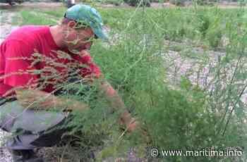 Bientôt un arrêté anti-pesticide à Gignac-la-Nerthe - Maritima.Info - Maritima.info