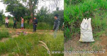 Robaban limón en la parcela del líder del PAN en Tlapacoyan - Vanguardia de Veracruz