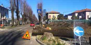 Tradate, iniziano i lavori per la rotonda di via Crestani - Varese Settegiorni