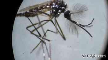 Poncitlán y Jocotepec acumulan casos de dengue en Ribera de Chapala - UDG TV