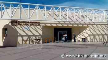 En Huatabampo despuntan las picaduras de animales ponzoñosos - TRIBUNA