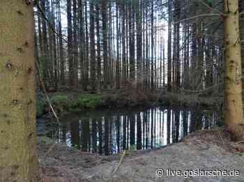 Löschwasserteiche für den Nationalpark | Wernigerode/Ilsenburg - GZ Live