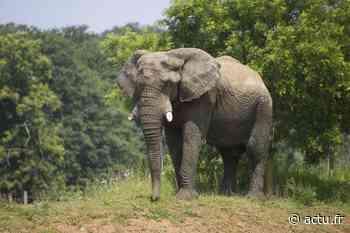 Yvelines. Le safari de Thoiry ouvre le 16 mai - actu.fr