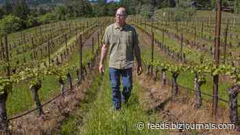 Oregon wineries and grape growers plot a path forward amid Covid uncertainties