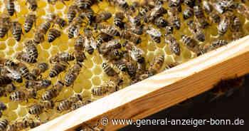 Lohmar: Diebe stehlen Bienenvölker - Polizei ermittelt - General-Anzeiger