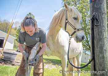 Us: Wild horses couldn't drag her away from the life of a farrier