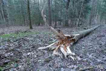 Forstbilanz: Der Gemeindewald wirft für Gerstetten über 111 000 Euro ab - Heidenheimer Zeitung
