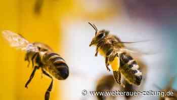 Bienenseuche in Ortenberg festgestellt - Wetterauer Zeitung
