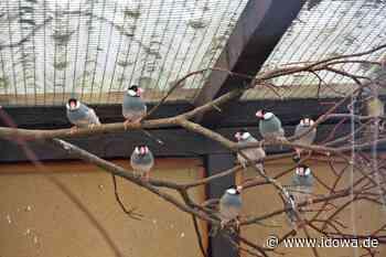 Reisbach: Rassegeflügelzüchter Aigner stellt gefiederte Mitbewohner vor - Dingolfinger Anzeiger