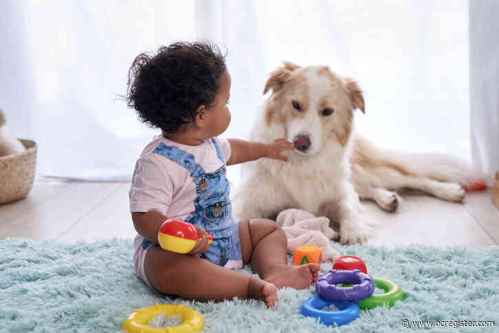 Power of pets: Exploring psychological effects of adding a dog to the family