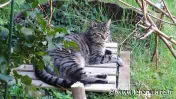 Animaux - En Haute-Vienne aussi, le piégeage du chat à plus de 300 mètres des habitations est perçu comme une solution par les chasseurs - lepopulaire.fr