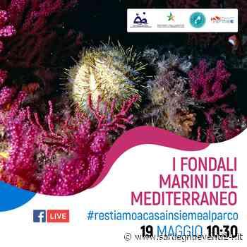 Alla scoperta dei segreti dell'Area Marina Protetta dell'Asinara - SardegnaEventi24