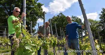 Einer der seltensten Weine Deutschlands: Der Weiße aus Obermaubach kann was - Aachener Zeitung
