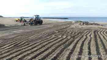 Agde : les plages sont prêtes pour leur réouverture ce samedi - Midi Libre