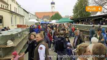 Peta will Kleintiermarkt in Meitingen wegen Pandemie-Gefahr verbieten lassen - Augsburger Allgemeine