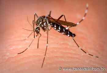 Segundo caso de dengue é registrado em Abelardo Luz - Canal Ideal