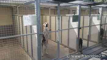 Le refuge pour animaux de Gerzat sort d'une période compliquée mais positive - France Bleu