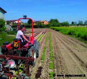 Aziende agricole, il coronavirus mette in difficoltà le imprese - La Piazza
