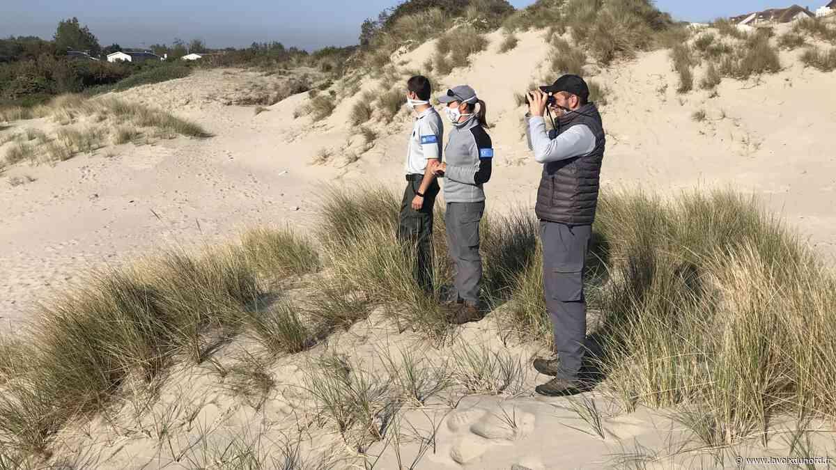 Bray-Dunes: les dunes de nouveau accessibles mais toujours à protéger - La Voix du Nord