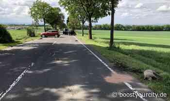 Hausschweine verursachen Unfall zwischen Alzey und Bad Kreuznach   BoostyourCity - Aktuelle Nachrichten aus deiner Region - Boost your City