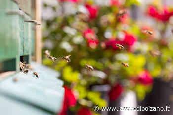 Brixen to Bee: Bressanone Turismo porta le api in città. Un progetto per una Bressanone sostenibile - La Voce di Bolzano
