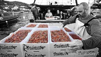 """""""Vivo per te"""", il pesce dell'Argentario e i prodotti della Maremma arrivano a Roma"""