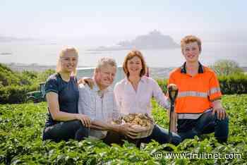 Cornish New potatoes flourishing after wet start
