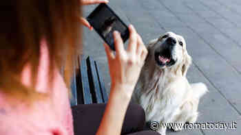 Gli animali più social: influencer a 4 zampe