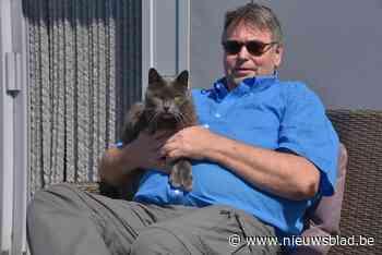 'Katman' Raf springt in de bres voor katje Lee: al 50.000 (!) handtekeningen ingezameld - Het Nieuwsblad