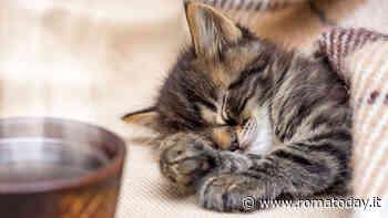 L'alimentazione più adatta per i cuccioli di gatto
