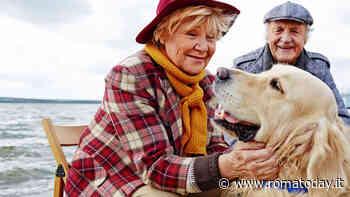 Come un animale domestico può migliorare la vita delle persone anziane