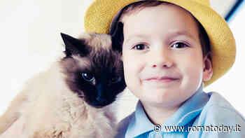 Gatti e allergia: le razze ideali per chi soffre di allergia