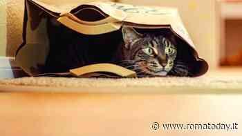 Le 10 abitudini dei gatti spiegate dalla scienza