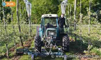 Die Bioäpfel aus Oberndorf - Region Neumarkt - Nachrichten - Mittelbayerische