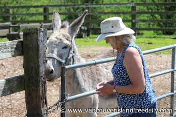 Vancouver Island farm using donkeys to protect sheep from bears, dogs - vancouverislandfreedaily.com
