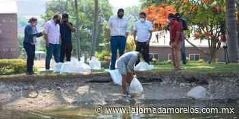Sembraron 6 mil crías de tilapia en lago de Jojutla - La Jornada Morelos